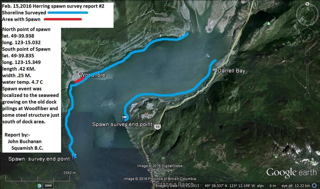 Upper Howe sound Spawn survey Feb. 15,2016 (13)